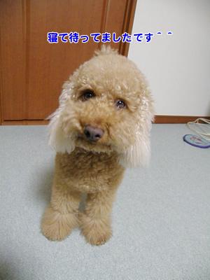 20100113_4.jpg
