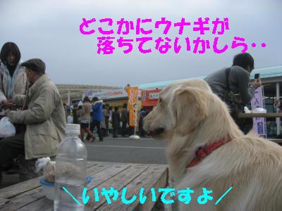 IMG_0296_convert_20100104225157.jpg