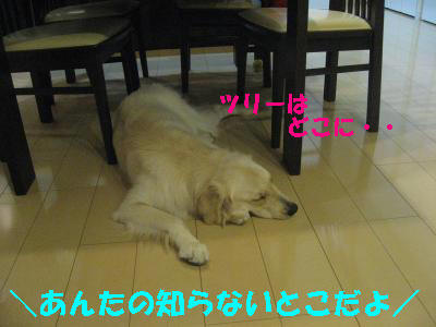 IMG_5477_convert_20091122184915.jpg