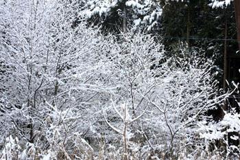 那須の雪景色3