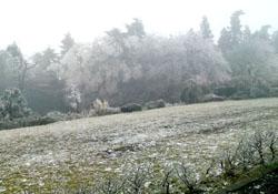 氷の花1s