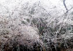 氷の花2s