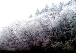氷の花4s
