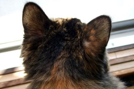 耳の後ろに