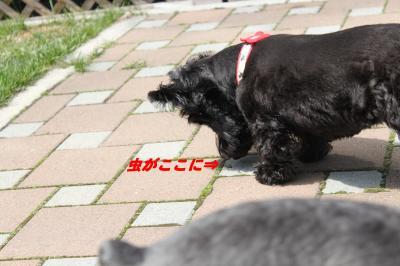 009_convert_20100425152436.jpg