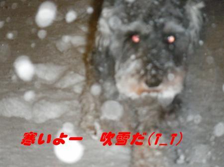 027_convert_20091224230953.jpg