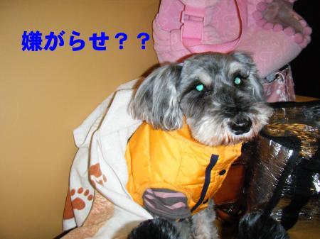 042_convert_20100101222838.jpg
