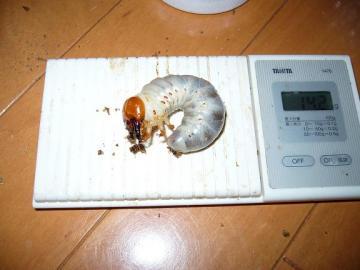 AR2010_0125gazo30007.jpg
