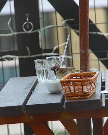 雀cafe2