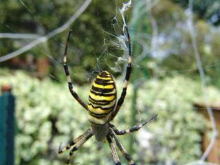 tnH20-08-20蜘蛛 (3)