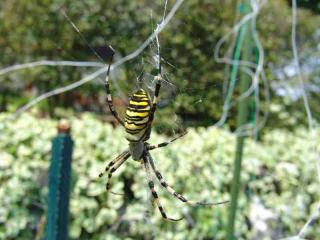 tnH20-08-20蜘蛛 (4)