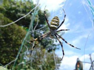 tnH20-08-20蜘蛛(1)