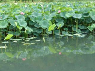 tnH20-08-22蓮池 (25)