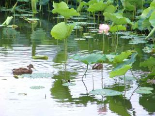 tnH20-08-22蓮池 (40)