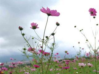 tnH17-10-15花の森 (9)