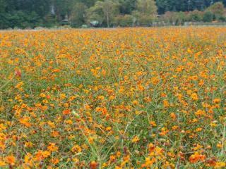 tnH17-10-15花の森 (4)