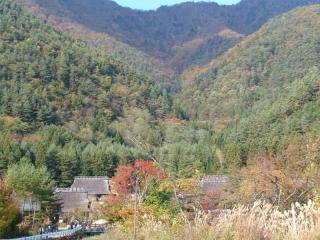 tnH20-10-30癒しの里西湖根場 (2)