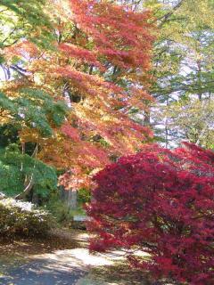 tnH21-10-30富士びゅーの庭(1)