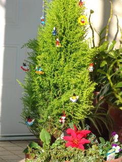 tnH21-12-02ゴールドクレストのクリスマスツリー (9)