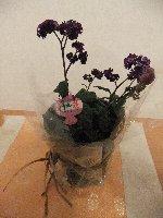 20110325香水の花