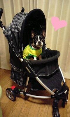 mothercart.jpg