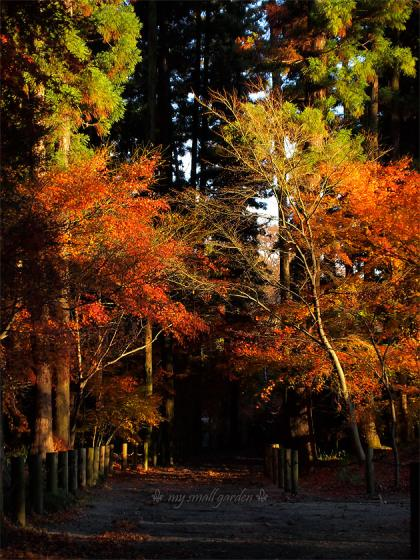 平林寺の紅葉2010
