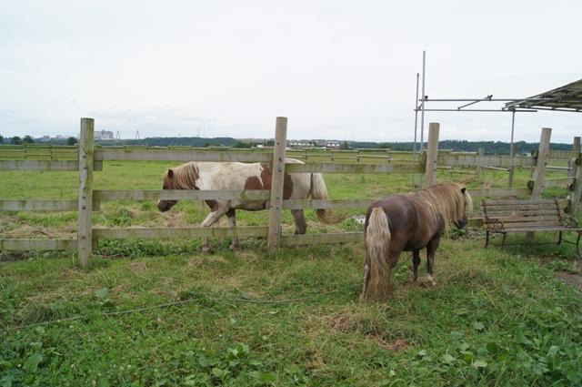 ホリ牧場2
