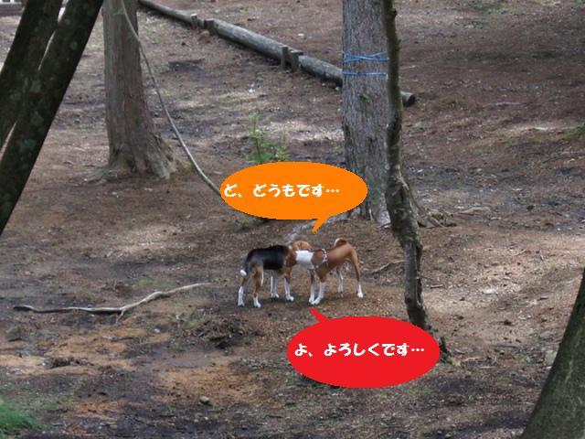 森のドッグラン6