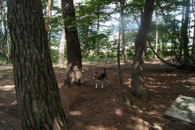 森のドッグラン2