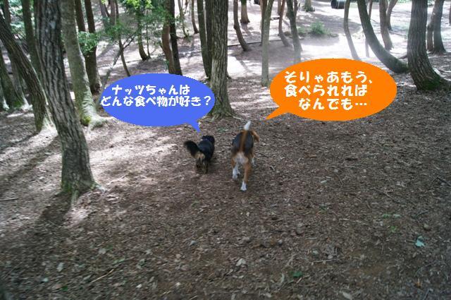 森のドッグラン5