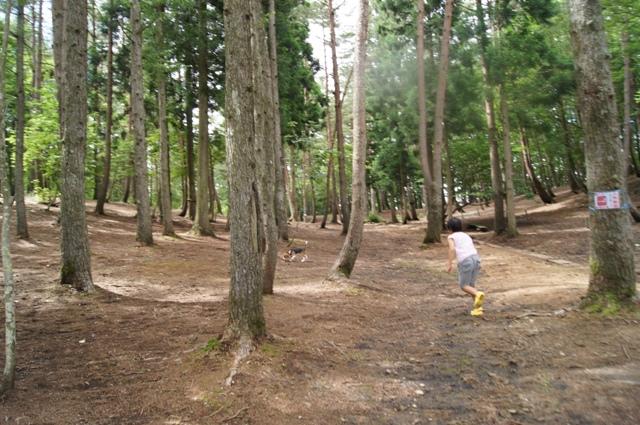 森のドッグラン1
