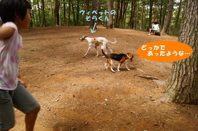 森のドッグラン7