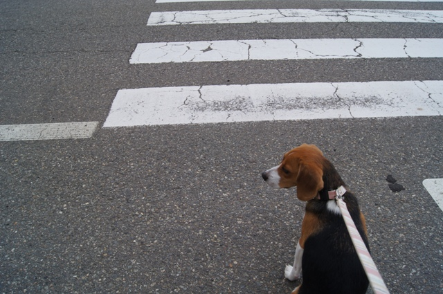 横断歩道3