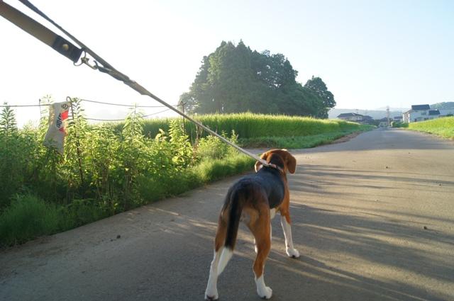 早朝の散歩1