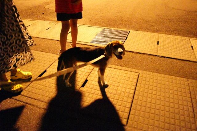 夜の散歩5
