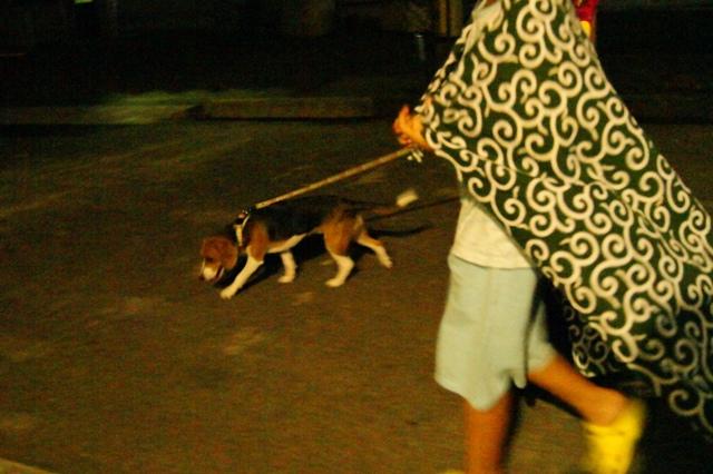 夜の散歩4