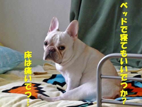 P1070328_convert_20100917234028.jpg