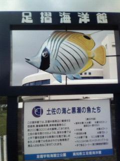土佐の海と黒潮の魚たち