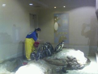 ペンギンのえさやり