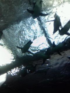 ペンギンが上を泳ぐ