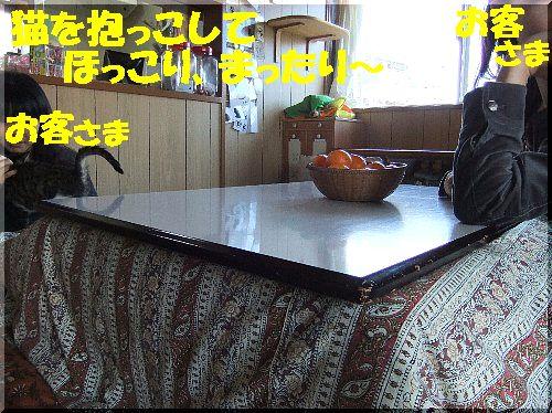 cafe1gatu.jpg