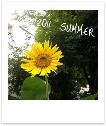 2011 -夏