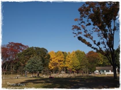 Yoyogi-Park1.jpg