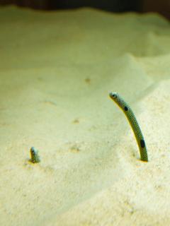 aquarium06.jpg