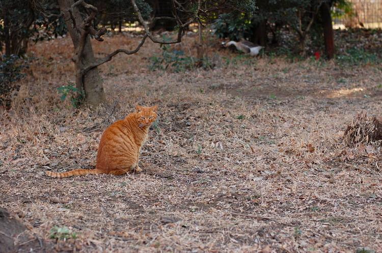 振り向き猫