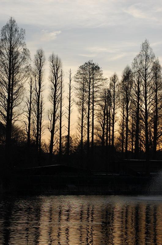夕日と針葉樹4
