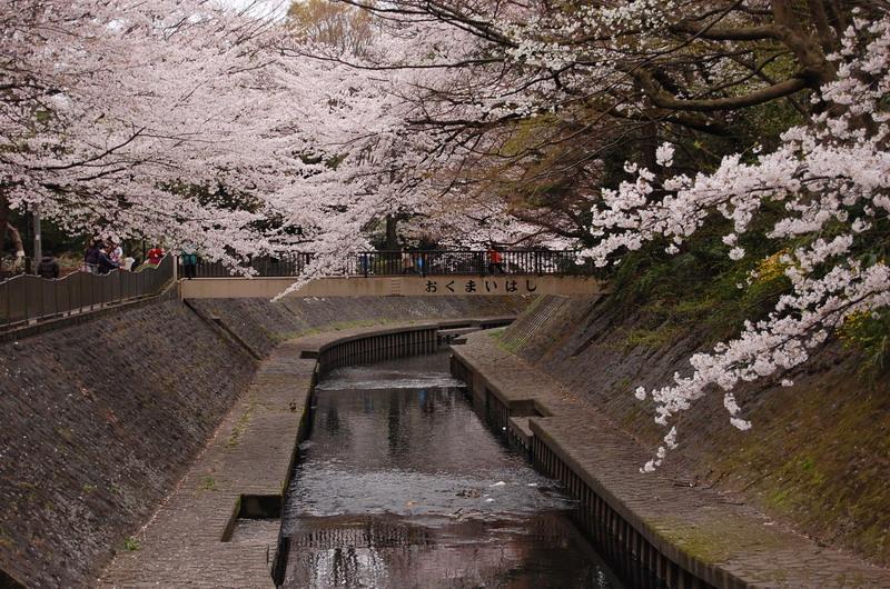 和田堀公園桜