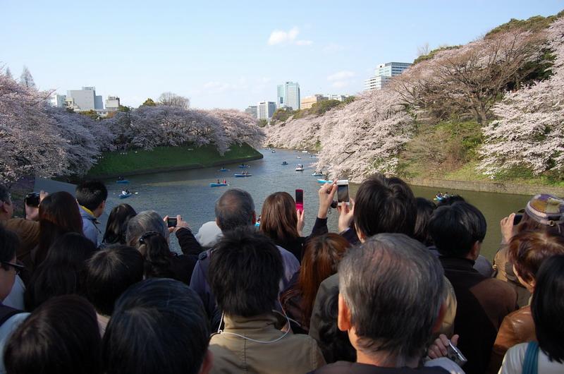 千鳥ヶ淵桜11