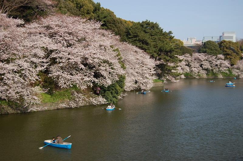 千鳥ヶ淵桜10