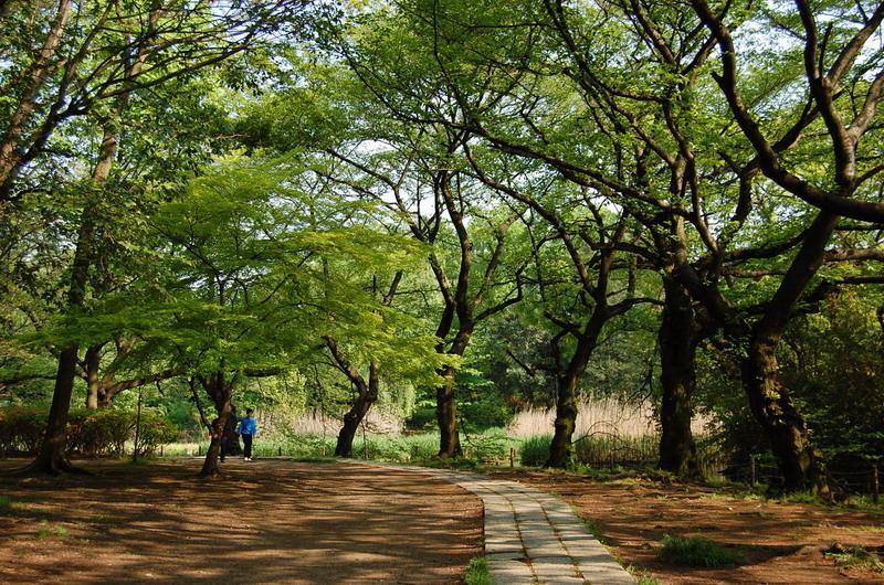 下池新緑遊歩道